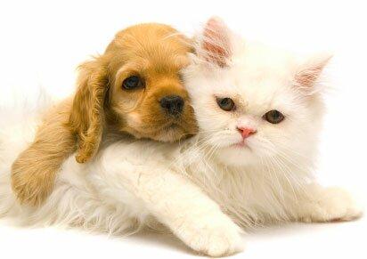 коте и куче 3