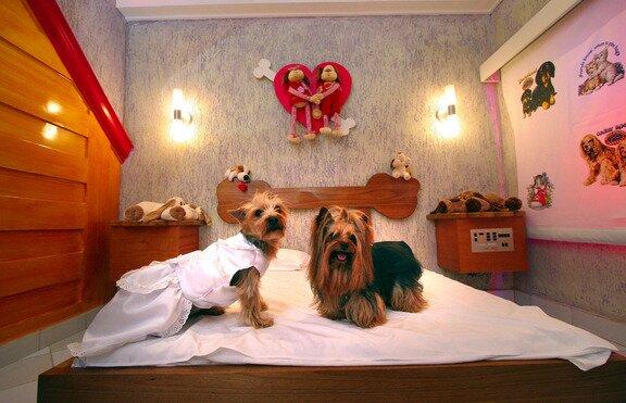любовен+хотел+за+кучета