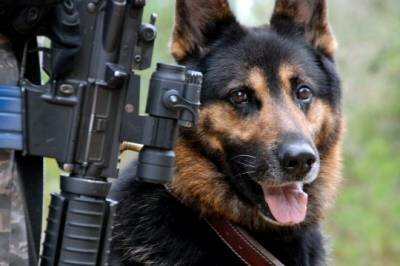 Военните кучета 1