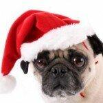 Коледата на мопса 1