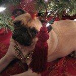 Коледата на мопса 3
