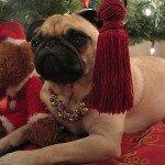 Коледата на мопса 4