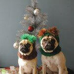 Коледата на мопса