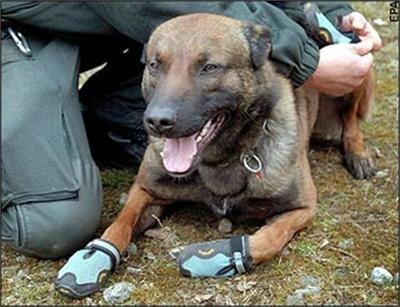 полицейските кучета
